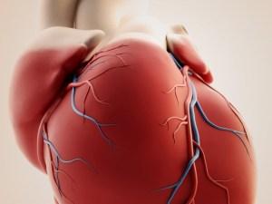 доксорубицин-индуцированная кардиомиопатия, железо, митохондрий