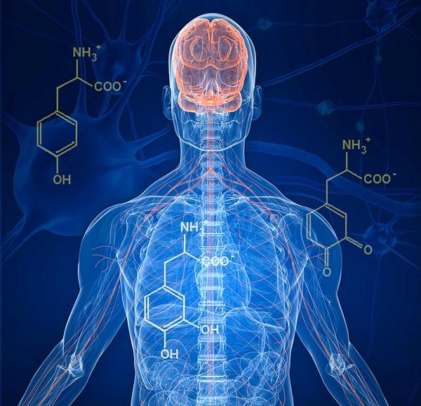 Действие центральной нервной системы на эректильную функцию