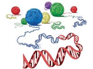 рак предстательной железы, ген