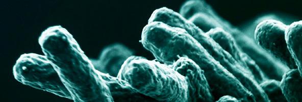 моноциты, инфекция