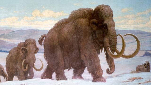 мамонт, ген, слон