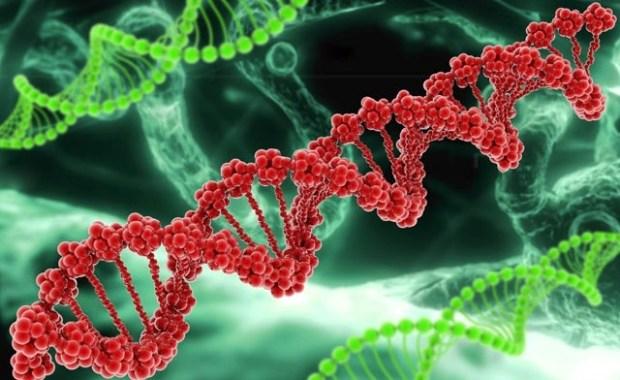 BRCA1, болезнь Альцгеймара, ген, рак молочной железы
