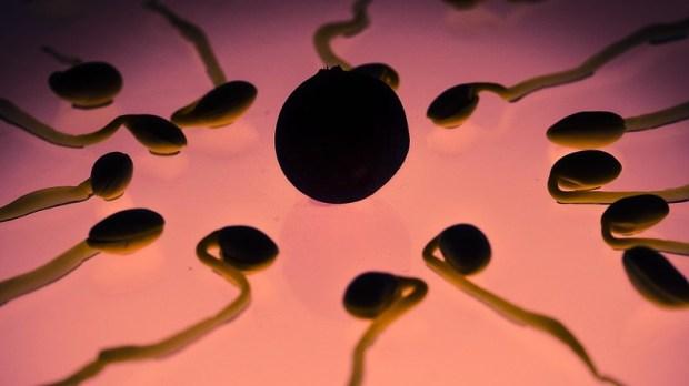 бесплодие, сперматозоид, SPE-45, черви