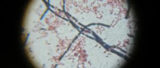 микрофлора, микробиом