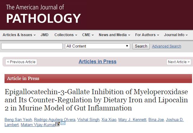 зеленый чай, железо, The American Journal of Pathology