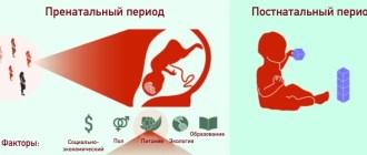беременность, фрукты, EbioMedicine