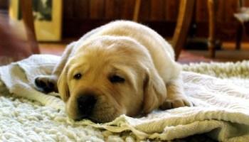 собаки, Cell Metabolism, ожирение