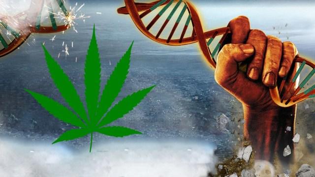 марихуана, ген