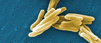 Малярия, туберкулёз, артемизинин
