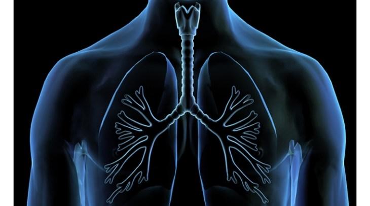 Загрязнение воздуха, лёгкие, кровеносные сосуды