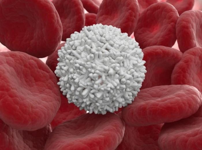лейкоциты, лейкоцитоз