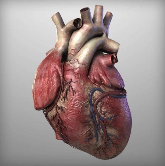 физические упражнения, защитное действие на сердце