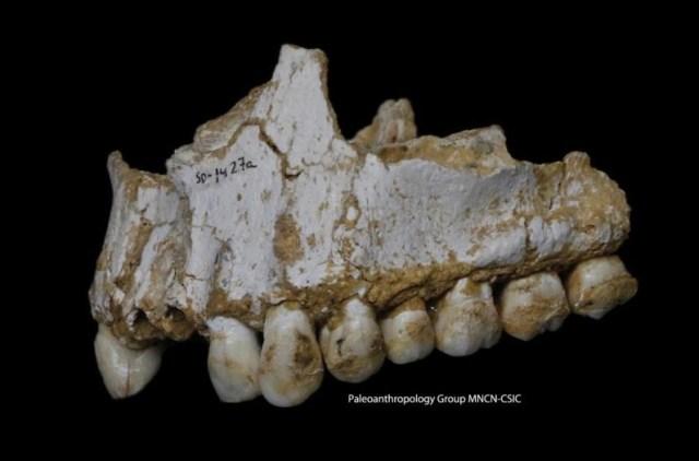 неандертальцы, аспирин