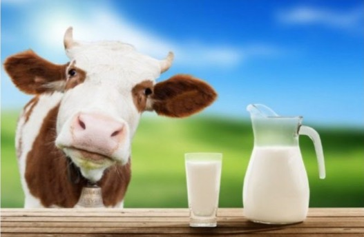 молоко, левотироксин