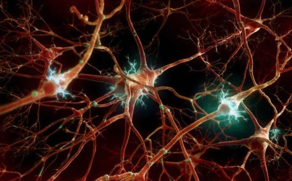 деменция, гибель нейронов