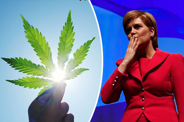 Scottish Cannabis Legalisation: Government Discuss with Activists