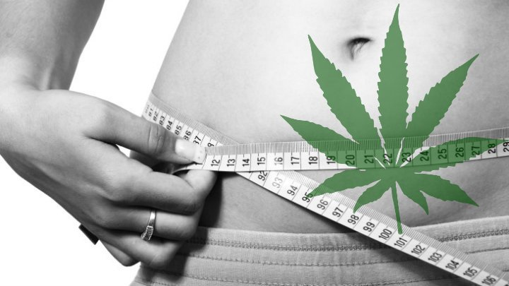 Cannabis best for weight loss
