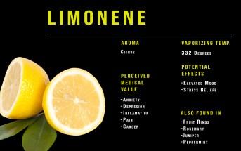 Terpene profile lemon citrus limonene