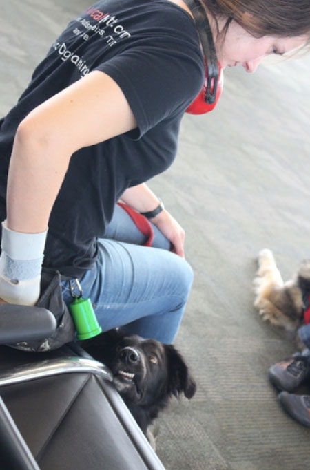 What Is Involved With Training My Own Service Dog Medical Mutts Service Dogs