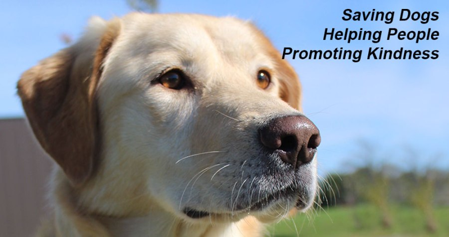 Photo of lab with overlay text: Saving Dogs, Helping People, Promoting Kindness