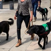 How to select a dog to train as your service dog?