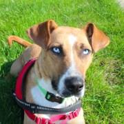 How to Train a Seizure Alert Dog