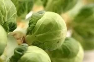 Cruciferous Vegetables Image