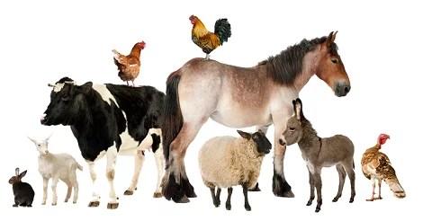 animal-species