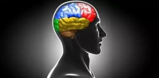 brain-dictionary