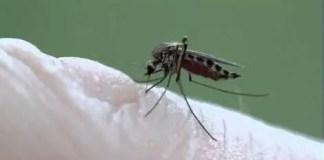 Mosquito-Borne Viruses