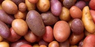 potassium gluconate supplements
