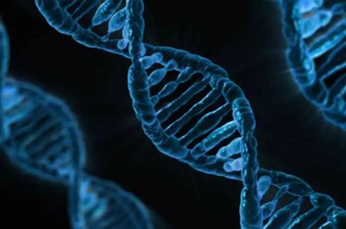 atherosclerosis development