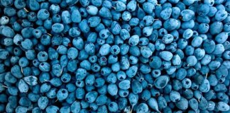 blueberry supplements