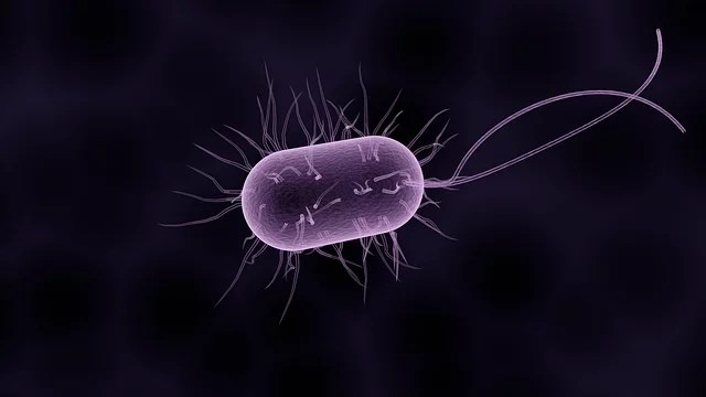 gut bacteria and cancer