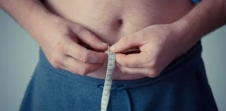 gut microbiome and obesity
