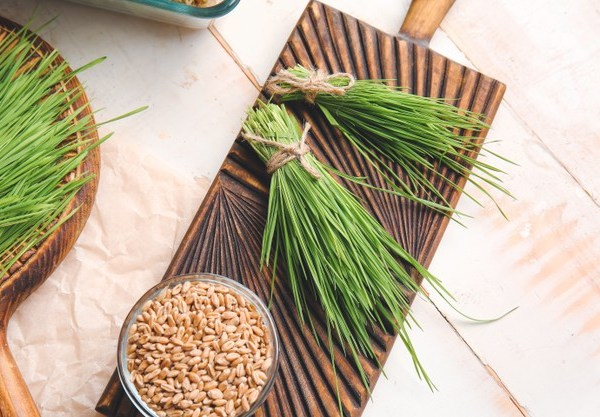 Wheatgrass – Meaning, Benefits, Dosages, Side Effects, Precautions