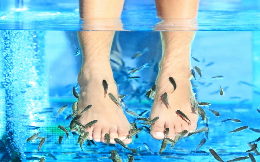 New Research – Fish Pedicure Could Spread HIV and Hepatitis C