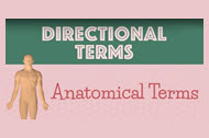 Video - Anatomical Directional Terms