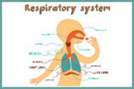 Medical Terminology Crossword - Respiratory System