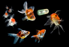 Photo of أدوية مضادة للاِكتئاب في مياهنا