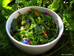 plantes_comestibles_Anne_Richard
