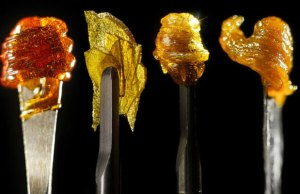 Cannabis-DabbingConcentrates