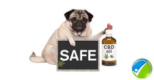 CBD safe