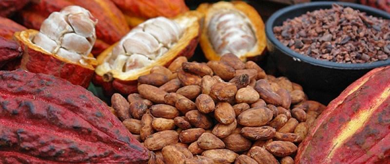 El cacao contiene flavonoles que podrían frenar la pérdida de masa y función de las células beta del páncreas que causa esta enfermedad.
