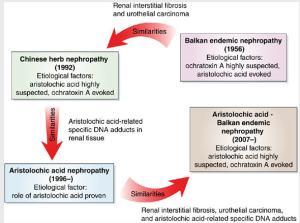 Proposed relationship of AAN and BEN - Debelle, et al