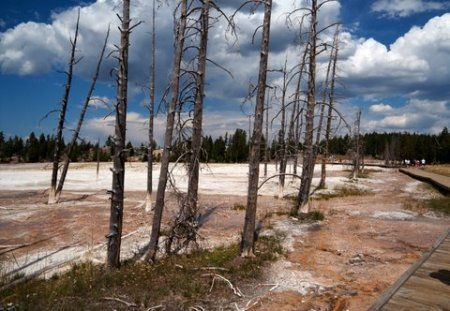 yellowstone desolation
