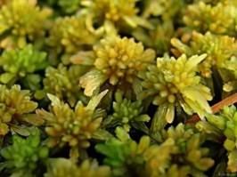 Торфяной мох - состав, лечебные свойства и применение