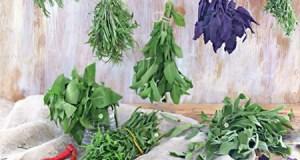Лекарственные травы от эпилепсии