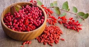 Барбарис обыкновенный - лечебные свойства и применение