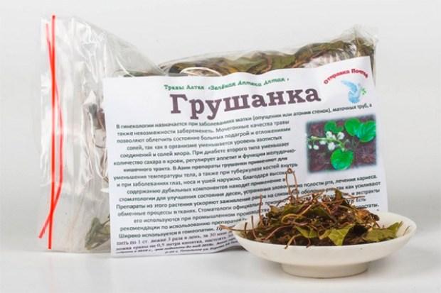 Грушанка - полезные свойства и народные рецепты
